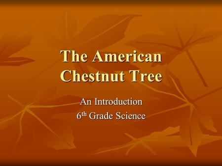 The American Chestnut Tree An Introduction 6 th Grade Science.