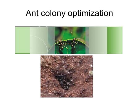Ant colony optimization. HISTORY introduced by Marco Dorigo (MILAN,ITALY) in his doctoral thesis in 1992 Using to solve traveling salesman problem(TSP).traveling.