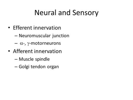 Neural and Sensory Efferent innervation – Neuromuscular junction –  -,  -motorneurons Afferent innervation – Muscle spindle – Golgi tendon organ.