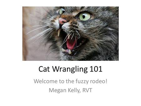 Cat Wrangling 101 Welcome to the fuzzy rodeo! Megan Kelly, RVT.
