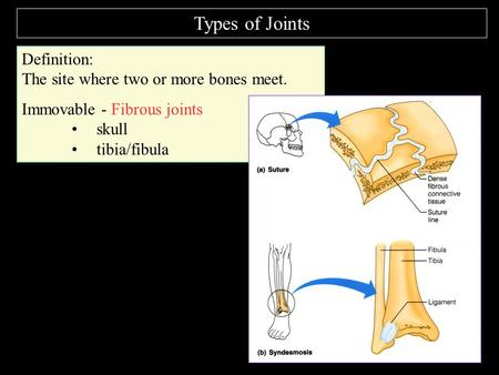 Types of Joints Definition: The site where two or more bones meet. Immovable - Fibrous joints skull tibia/fibula.