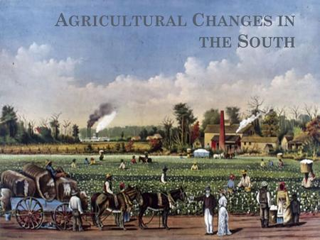 A GRICULTURAL C HANGES IN THE S OUTH. T HE G ROWTH OF C OTTON Southern Agriculture began to decline after the American Revolution. Prices for Cash Crops.