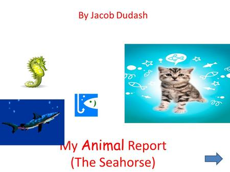 My Animal Report (The Seahorse) By Jacob Dudash Introduction I chose the Seahorse for three reasons. The first one is I like the sea, and horses. I also.