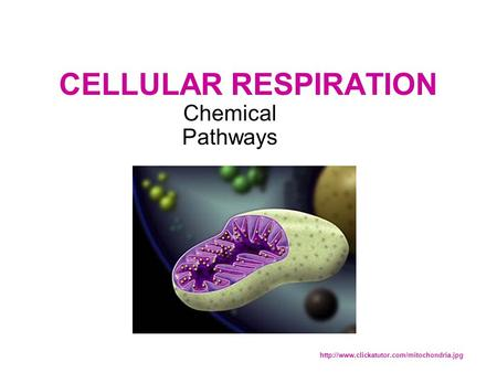 CELLULAR RESPIRATION Chemical Pathways