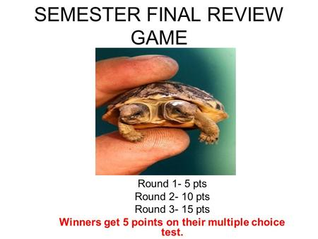 SEMESTER FINAL REVIEW GAME Round 1- 5 pts Round 2- 10 pts Round 3- 15 pts Winners get 5 points on their multiple choice test.