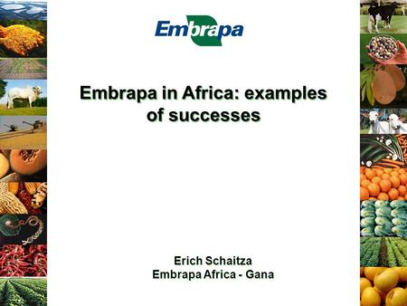 Embrapa in Africa: examples of successes Erich Schaitza Embrapa Africa - Gana Erich Schaitza Embrapa Africa - Gana.