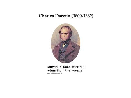 Darwin in 1840, after his return from the voyage Darwin's Big Idea Charles Darwin (1809-1882)