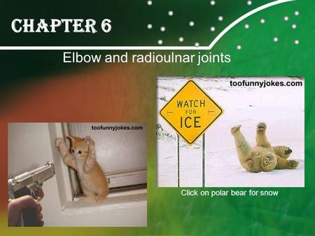 Chapter 6 Elbow and radioulnar joints Click on polar bear for snow.