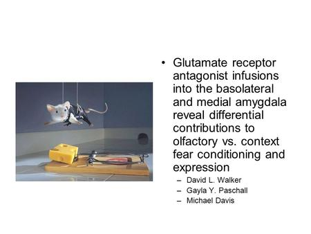 Glutamate receptor antagonist infusions into the basolateral and medial amygdala reveal differential contributions to olfactory vs. context fear conditioning.