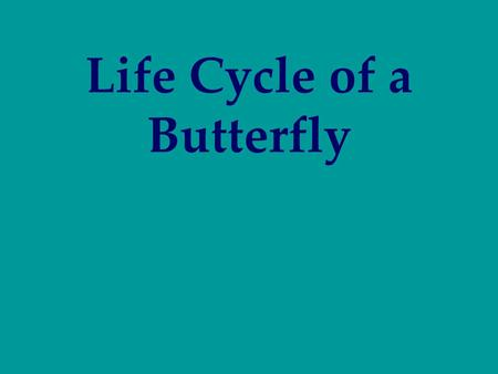 Life Cycle of a Butterfly. The egg is a tiny, round, oval, or cylindrical object, usually with fine ribs and other microscopic structures. The female.