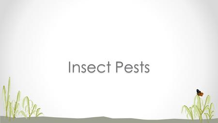 Insect Pests. Economic importance of insect pests Can cause direct damage to crops Can be vectors of plant pathogens.