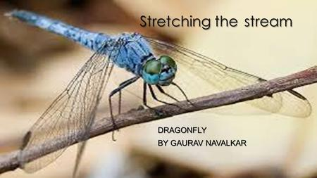 Stretching the stream DRAGONFLY BY GAURAV NAVALKAR.