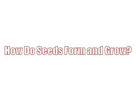How Do Seeds Form and Grow?