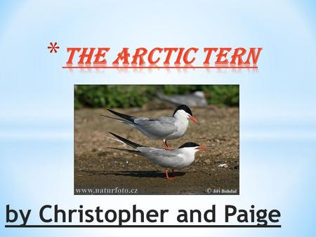 By Christopher and Paige. * First Slide…………………………….Title * Second Slide………………………….Table of Contents * Three Slide……………………………Life Cycle * Fourth Slide…...................Habitat.