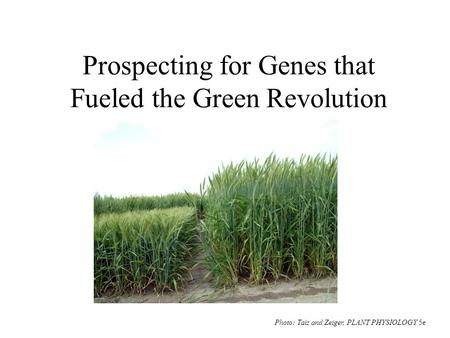 Prospecting for Genes that Fueled the Green Revolution Photo: Taiz and Zeiger, PLANT PHYSIOLOGY 5e.