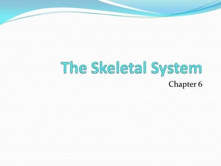 "Chapter 6. Lesson 1 Do Now I.C.E ""Broken Bones Functions of the Skeleton Support Protection Produce blood cells in the red marrow All fetal bones have."