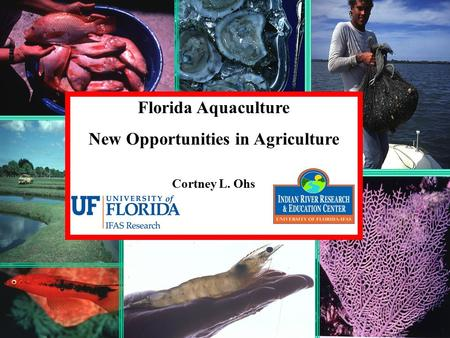 Florida Aquaculture New Opportunities in Agriculture Cortney L. Ohs.