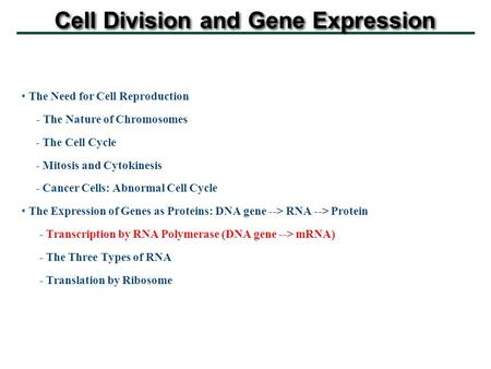 Cell Division and Gene Expression