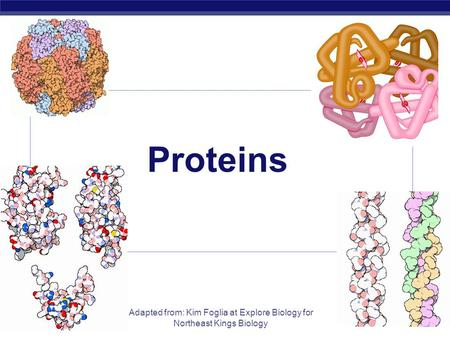 AP Biology Adapted from: Kim Foglia at Explore Biology for Northeast Kings Biology Proteins.