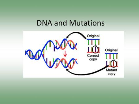 DNA and Mutations. Mutation Facts #1-5 Write down five facts about mutations as we go through the following videoclips Video 1 Video 2 – Repair Video.