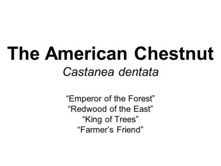 "The American Chestnut Castanea dentata ""Emperor of the Forest"" ""Redwood of the East"" ""King of Trees"" ""Farmer's Friend"""