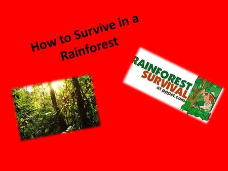 How to Survive in a Rainforest By Aisha Parvez. Facts about rainforests Giant bamboo plants grow 9 inches a day 30 million species of plant and animals.