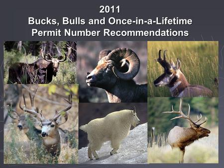 2011 Bucks, Bulls and Once-in-a-Lifetime Permit Number Recommendations.