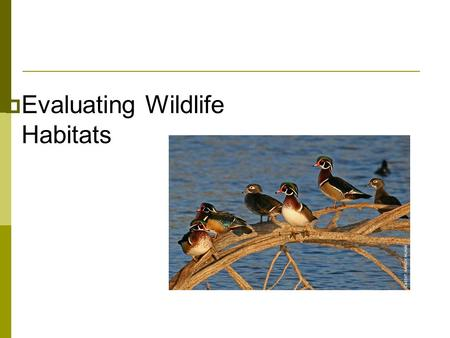  Evaluating Wildlife Habitats. Next Generation Science/Common Core Standards Addressed!  HS ‐ LS2 ‐ 6. Evaluate the claims, evidence, and reasoning.