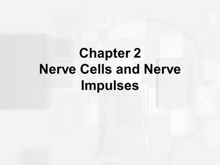 Chapter 2 Nerve Cells and Nerve Impulses. Neurons and How They Work: Link to video Link to video.