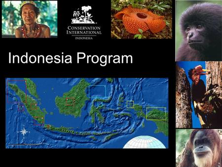 Indonesia Program. Northern Sumatra Biodiversity Corridor Outcomes: Saving 4.5 M Ha of Sumatra's last biodiversity stronghold Technical support for developing.