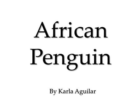 African Penguin By Karla Aguilar. The animal I chose as my area of focus is the African Penguin, also known as the Jackass Penguins (due to their bray.