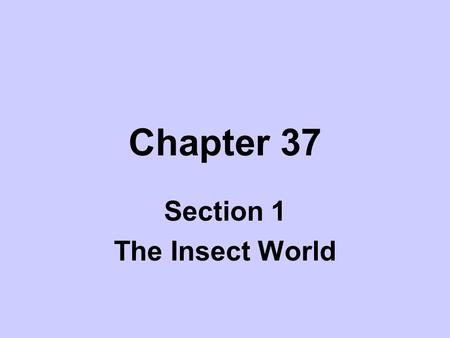 Section 1 The Insect World
