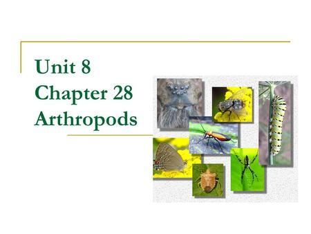 Unit 8 Chapter 28 Arthropods. What is an Arthropod? Bilaterally symmetrical, segmented coelomates Segmented body, exoskeleton & jointed appendages Appendages.