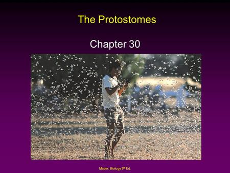 Mader: Biology 8 th Ed. The Protostomes Chapter 30.