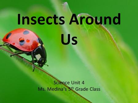 Insects Around Us Science Unit 4 Ms. Medina's 5 th Grade Class.