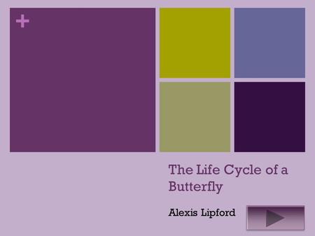+ The Life Cycle of a Butterfly Alexis Lipford. + Science 1 st grade Summary- The purpose of this Instructional PowerPoint is to help students learn about.