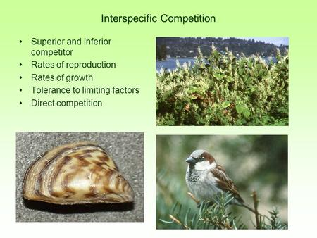 Interspecific Competition Superior and inferior competitor Rates of reproduction Rates of growth Tolerance to limiting factors Direct competition.