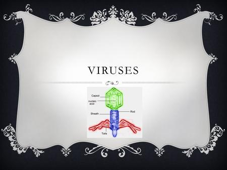VIRUSES. WHAT IS A VIRUS?  Virus: a tiny, nonliving particle that invades and then multiplies inside a living cell Act like a parasite that can only.