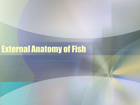 External Anatomy of Fish. The Head Mouth Shape/ Position Superior Mouth –Also known as an undershot or upturned mouth –Eats food above the fish –May.