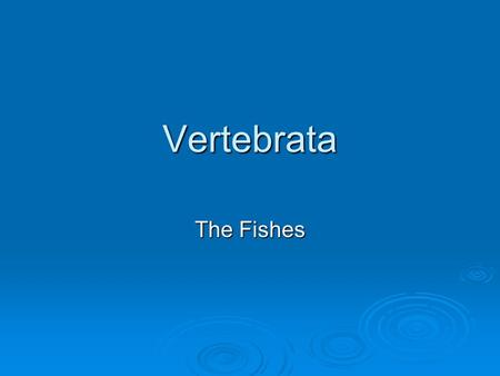 Vertebrata The Fishes. Superclass Agnatha Jawless Fishes.