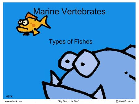 Marine Vertebrates Types of Fishes. I) Vertebrates A)Subphylum Vertebrae B)Four characteristics of chordates C)Backbone: AKA Spine or Vertebral Column.
