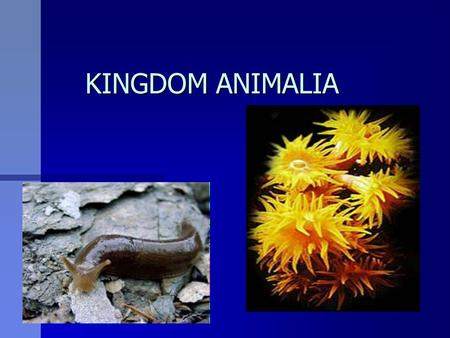 a report of kingdom of animalia Hosted by the usgs core science analytics and synthesis page designed through the cooperative efforts of interagency itis teams point of contact: itiswebmaster@itisgov.