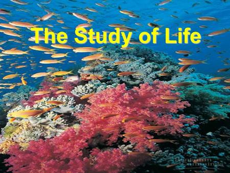 The Study of Life. All Living Things Share Common Characteristics 1. Basic Unit is the Cell 2. They Reproduce 3. Grow & Develop 4. Respond To Their Environment.
