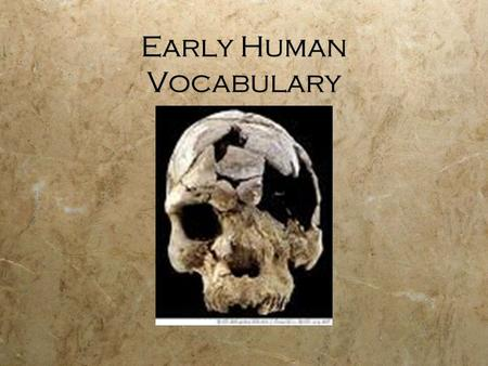 Early Human Vocabulary. Hominids  members of a family of primates (monkeys and humans) which include humans and their fossil ancestors.
