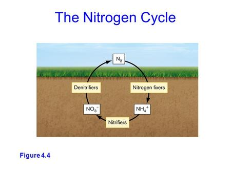 Figure 4.4 The Nitrogen Cycle. While N 2 is the ultimate source and sink of biospheric nitrogen, several oxidized and reduced forms occur in the environment.