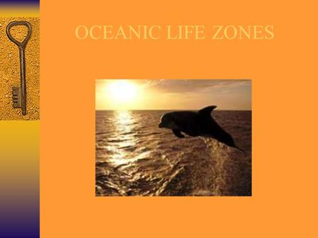OCEANIC LIFE ZONES. Overview of the Ocean Life Zones Horizontal Zones  Littoral Zone  Neritic Zone  Oceanic or PELAGIC Zone Vertical Zones  Sunlit.