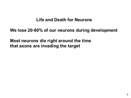 Life and Death for Neurons We lose 20-80% of our neurons during development Most neurons die right around the time that axons are invading the target 1.