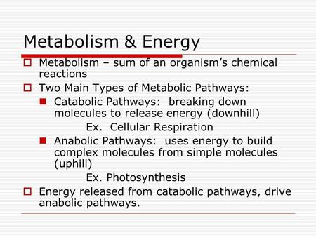 Metabolism & Energy  Metabolism – sum of an organism's chemical reactions  Two Main Types of Metabolic Pathways: Catabolic Pathways: breaking down molecules.