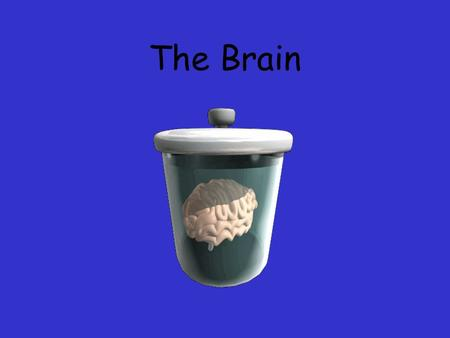 The Brain. Ways we Study the Brain Accidents Lesions CAT Scan PET Scan MRI Functional MRI.