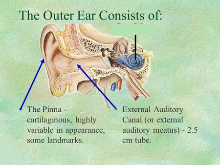 The Outer Ear Consists of: